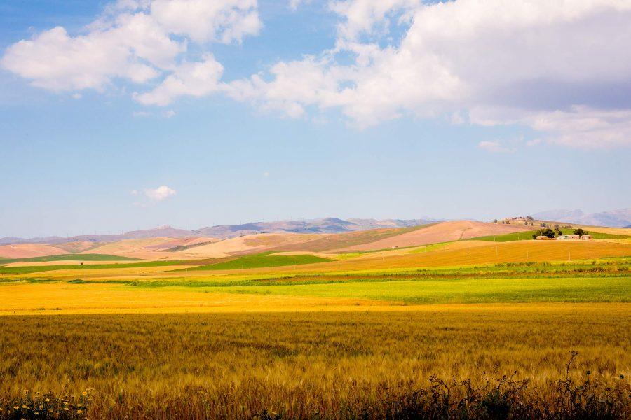 Pasta di Sicilia a filiera chiusa: sapore di grano e di sole